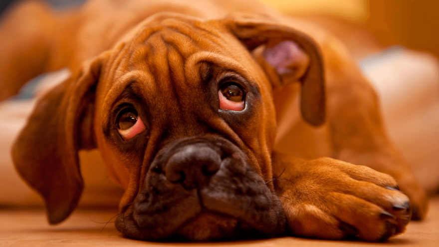 Main Reasons Why Dogs Sigh?