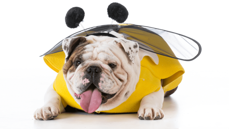 Dog Nutrition: Can Dogs Eat Honey