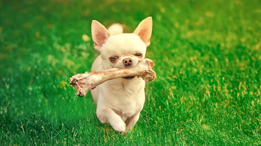 Should You Give Bones to Your Dog