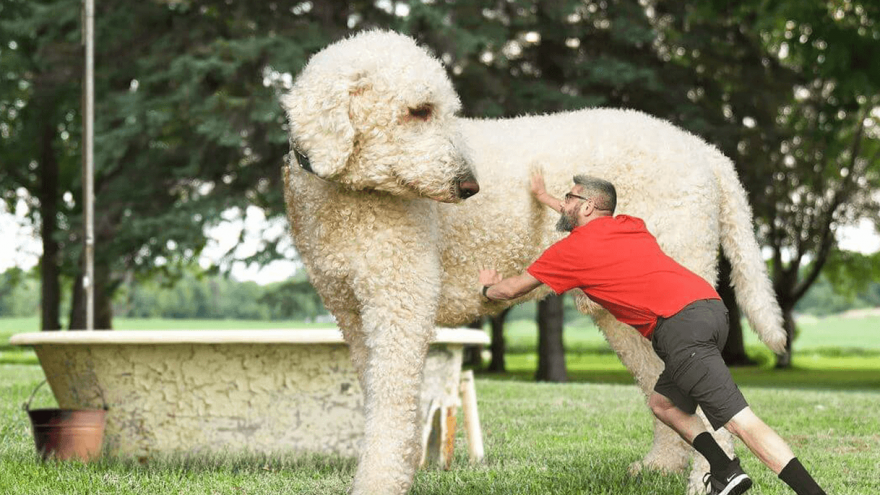 Juji Dog: Have You Heard About the Biggest Dog in the World?