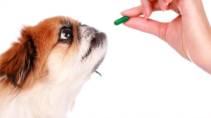 Clindamycin for Dogs - Usage & Side Effects