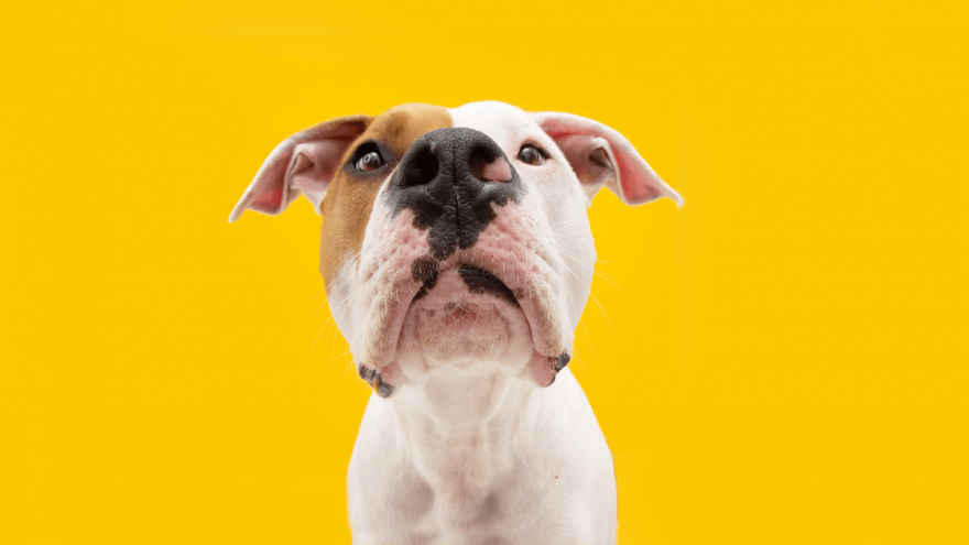 Which Dog Food Brands Should You Avoid?