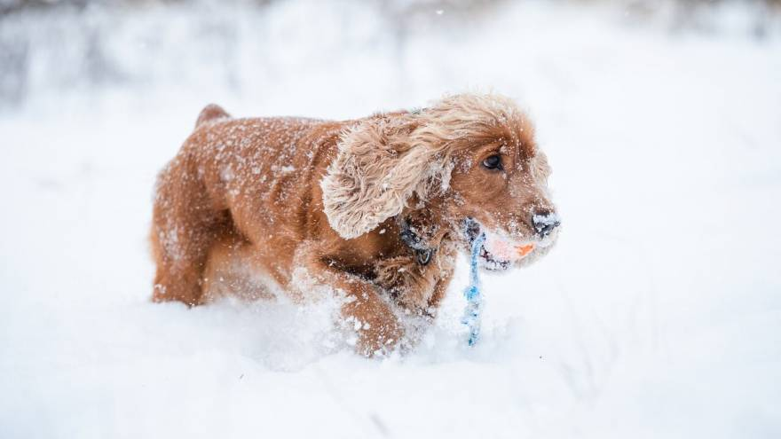 How to Teach a Dog to Fetch in 3 Easy Steps