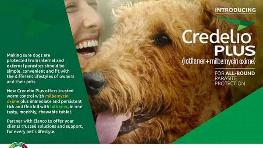 Is Credelio for Dogs Good & Where To Get It