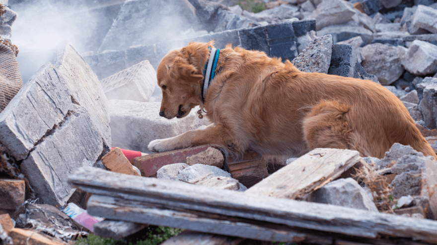 How To Help Your Dog In Case Of Earthquake