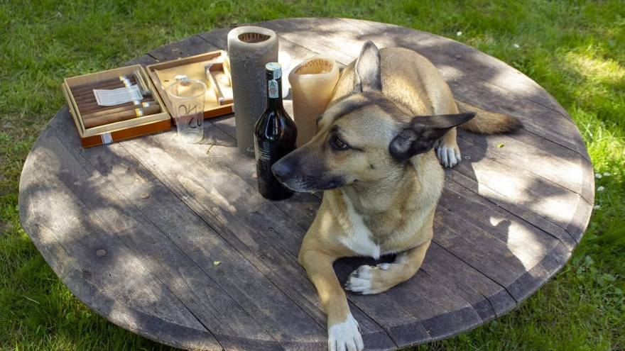 What If My Dog Drinks Alcohol?