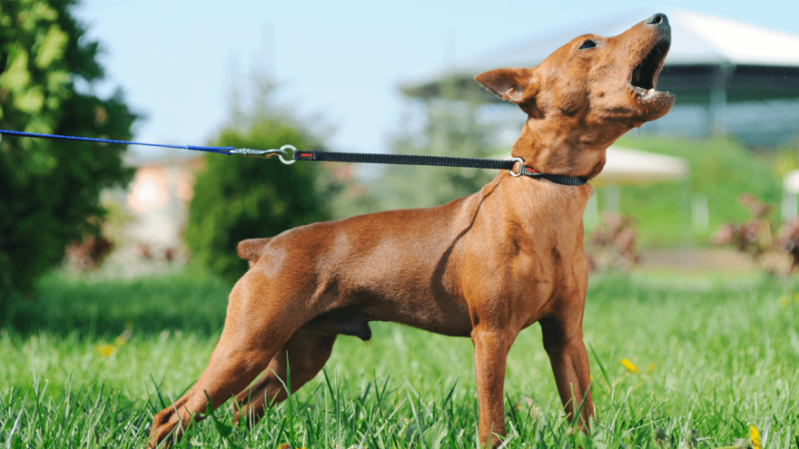 Best Anti-Barking Device for Homes in 2021