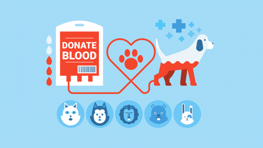 Can Dogs Donate Blood?