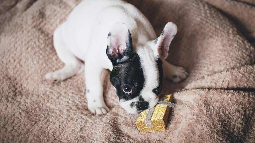 Best Gifts for Dog Lovers & Their Dogs