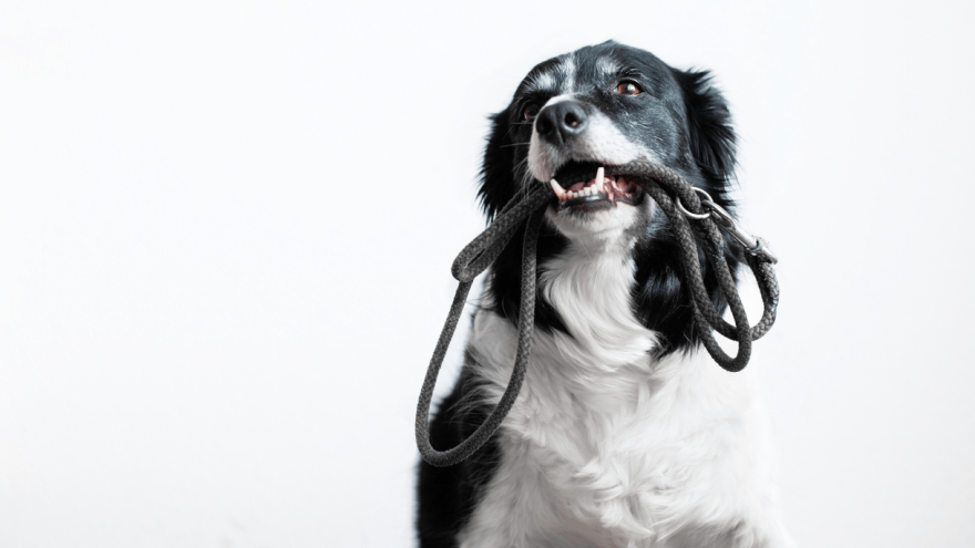 Best Rope Leashes for Dogs