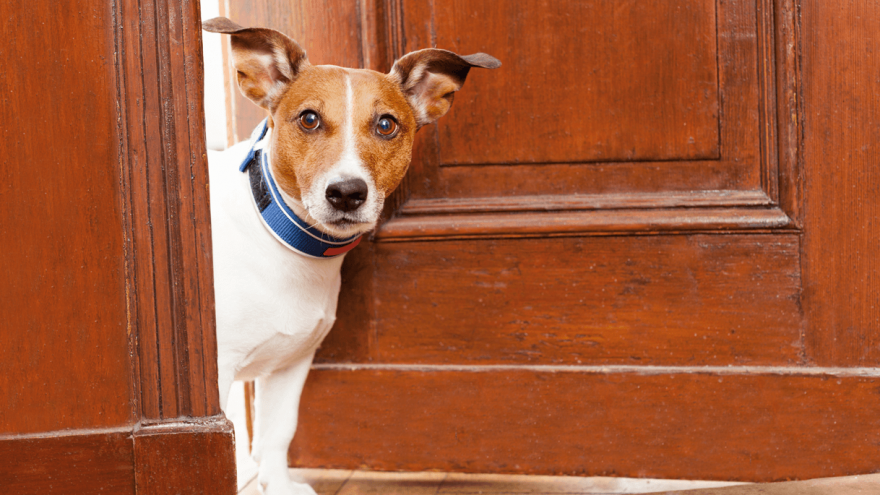 Best Dog Gates for Indoor Dogs