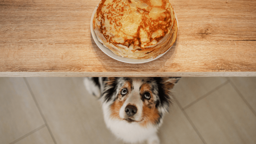 Dog Nutrition - Pancakes & Dogs