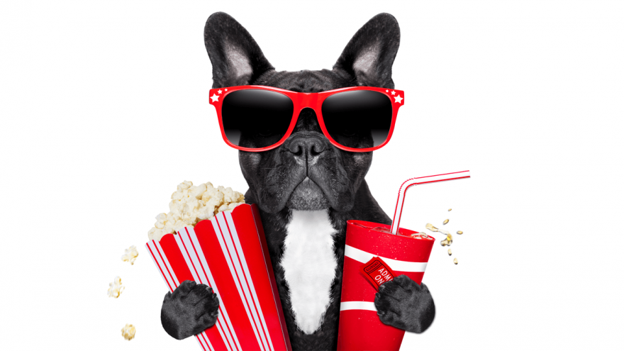 The Best 10 Dog Movies