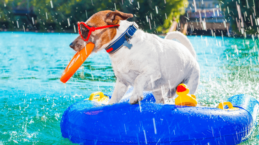 Best Dog Pool Floats for Summer