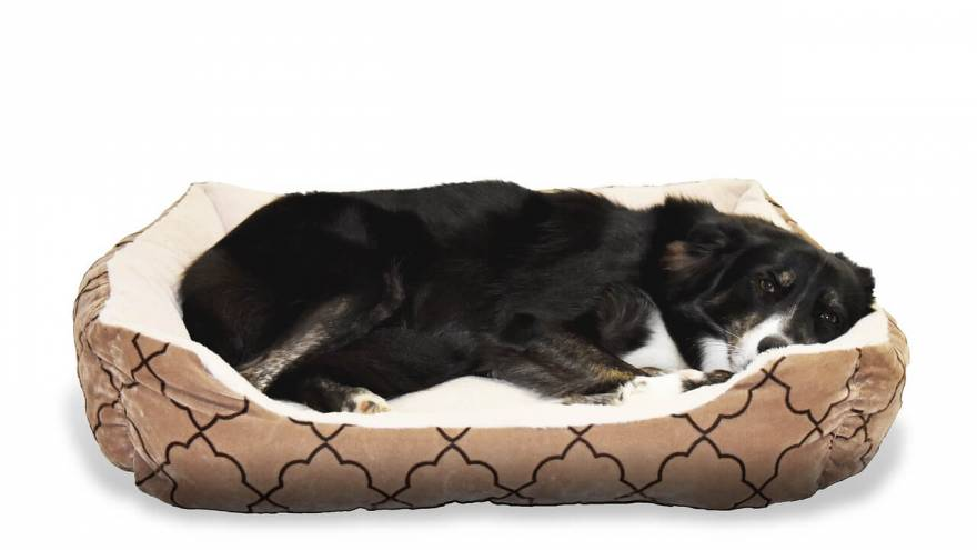 Best Heated Dog Beds in 2021