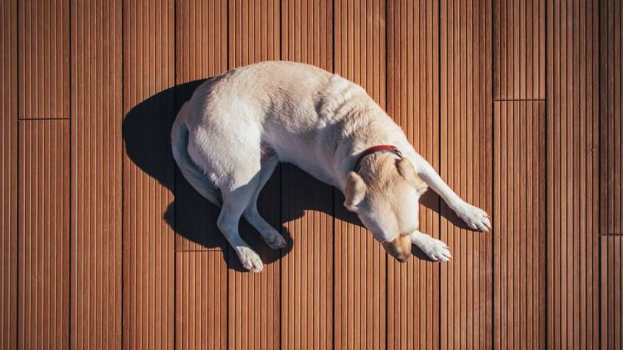 The Best Flooring Options for Dog Owners