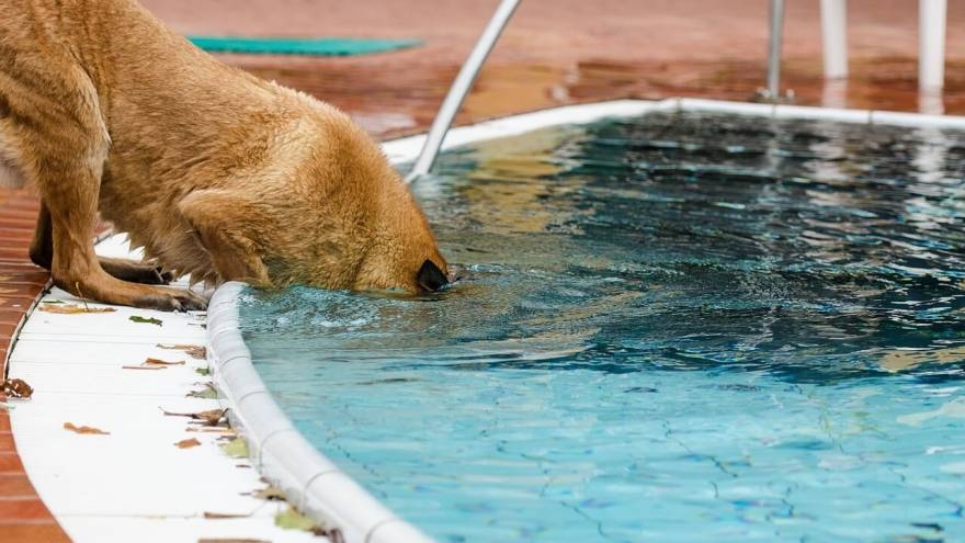 Best Dog Pools for 2021