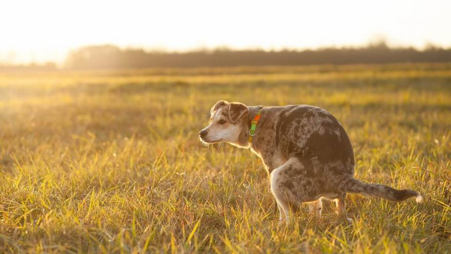 How to Make a Dog Poop Quickly?