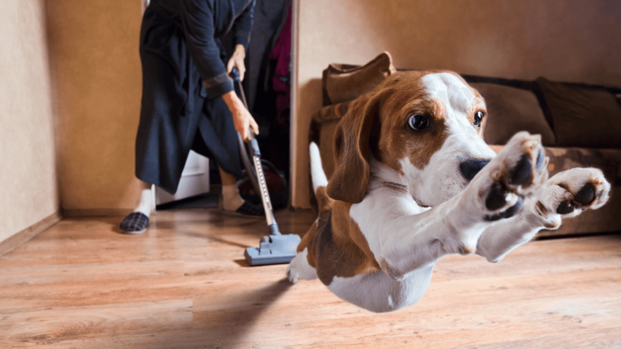 Top 3 Best Carpet Cleaners for Dog Owners