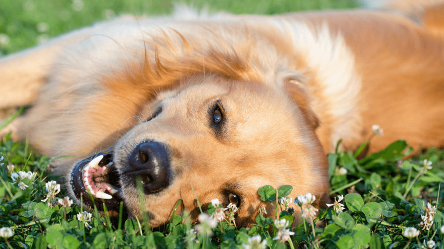 Here is How To Keep Your Dog Healthy and Happy