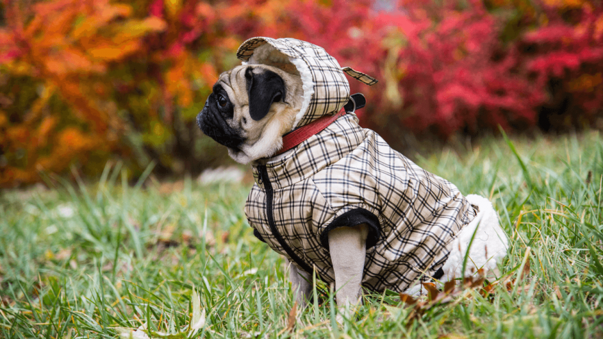 Best Dog Snowsuit for This Winter