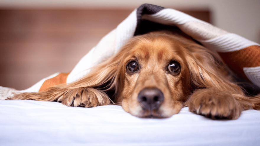 Should You Use Salmon Oil For Dogs?