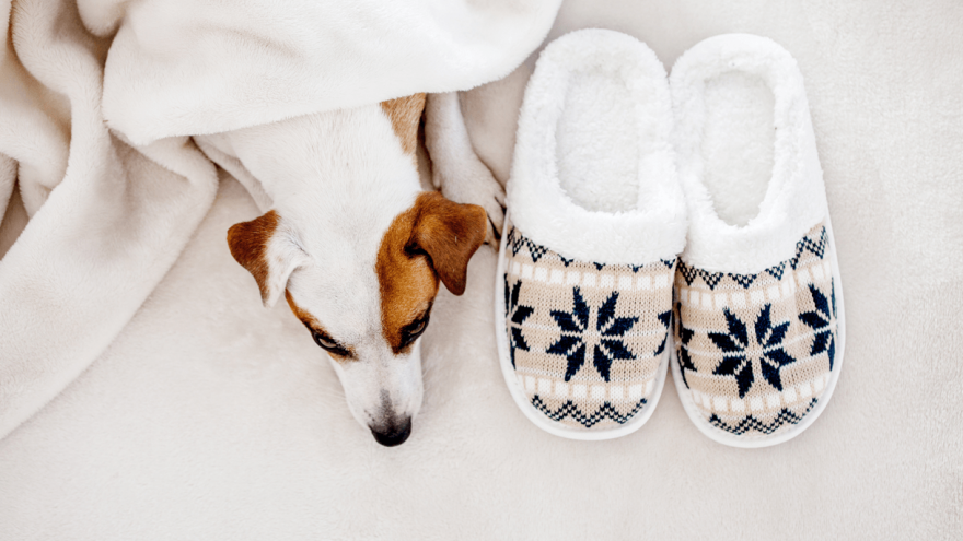 Best Dog Heating Pads in 2021