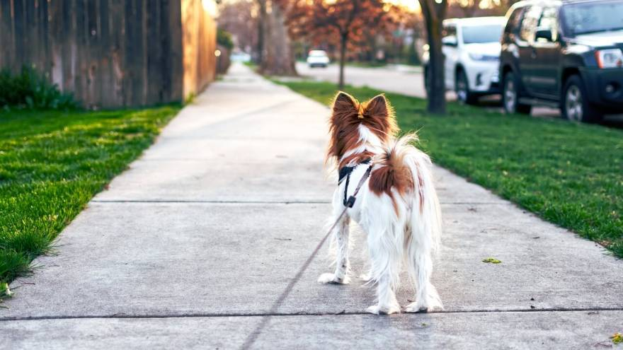 Ways to Check if It's Too Hot to Walk Your Dog