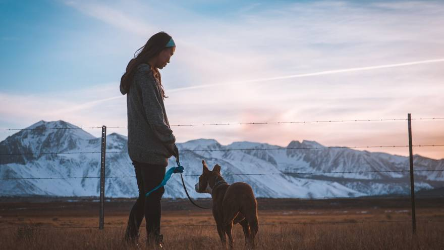 How Often Do You Walk Your Dog?