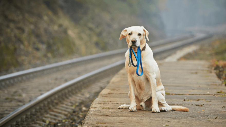 What Do You Do if an Off-leash Dog Approaches You While You are Walking a Dog?