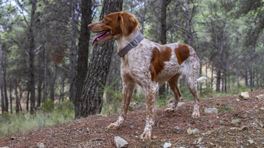 How to Pick the Best Dog Collar?