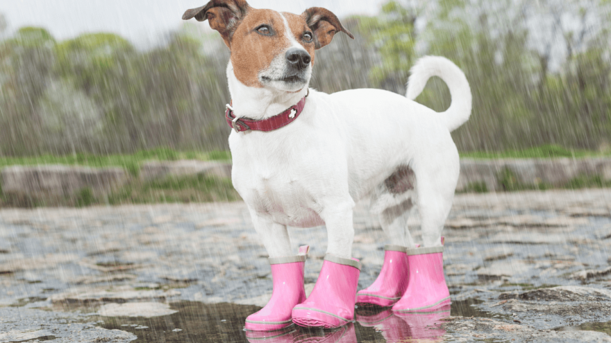 Best Dog Boots in 2021