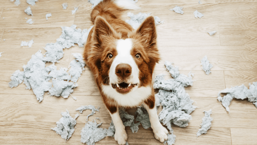7 Dog Breeds Most Likely to Suffer From Separation Anxiety