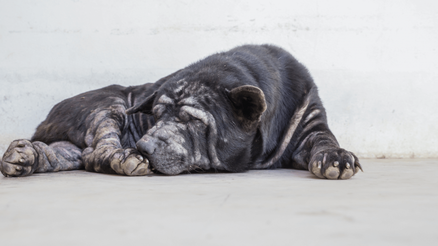 Mange in Dogs and What to do About It