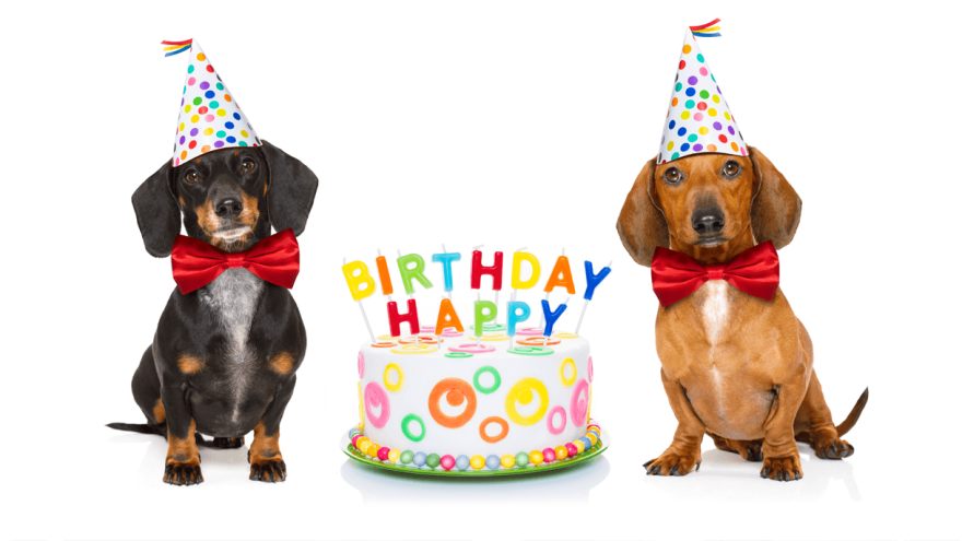 How to Calculate Dog Years to Human Years?