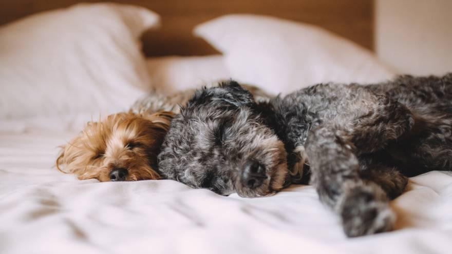 The 7 Dangers of Letting Your Dog Sleep in Your Bed