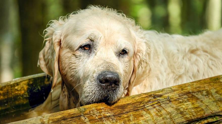 Osteoarthritis In Dogs: Causes, Symptoms & Treatment