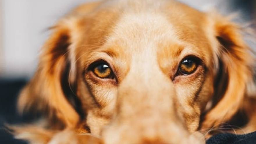 Epilepsy in Dogs: Signs, Symptoms & Medication