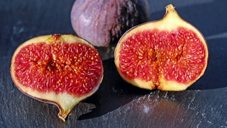 Should You Let Your Dog Eat Figs