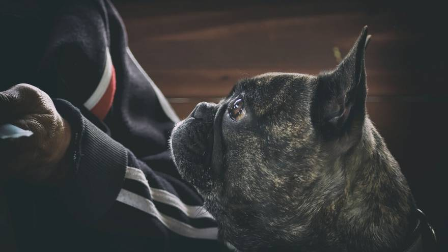 Have You Heard These Unique Dog Names?