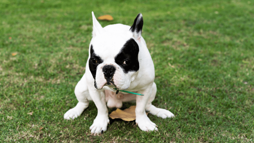 Best Natural Laxative to Help Your Dog