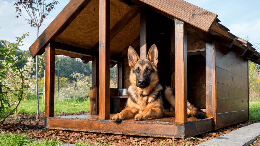 Best Insulated Dog Houses [2021 Review]
