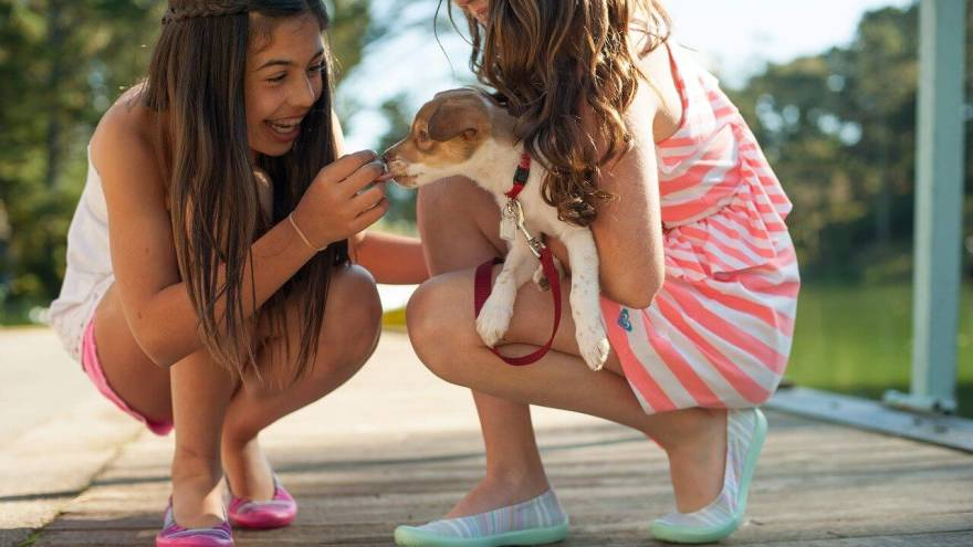 7 Tips on How to Approach & Safely Pet an Unknown Dog
