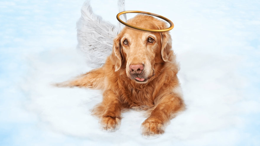 Do Dogs go to Heaven?