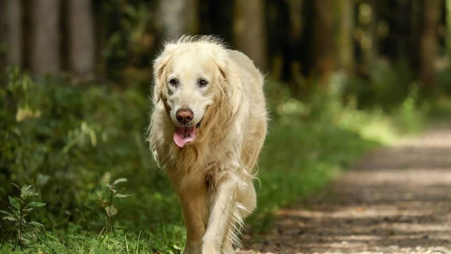 Best Dog Joint Supplements in 2021
