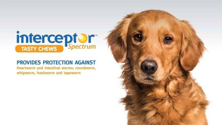 Is Interceptor Plus for Dogs a Good Choice?