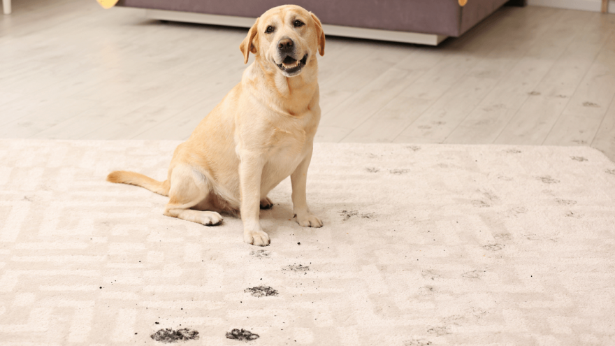 Best Paw Cleaners for Dogs in 2021