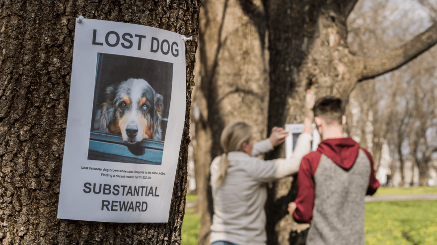What Can You Do if Your Dog Gets Lost