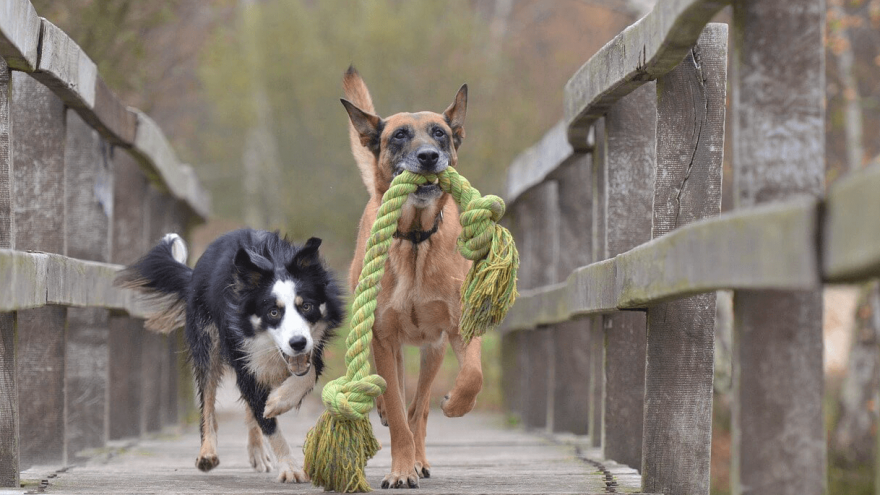 What to Look for in Indestructible Dog Toys?