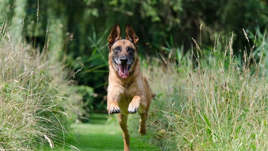 How Much Exercise Does a Dog Need in a Day
